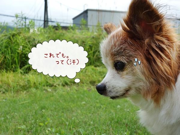 DSC01420.so2.JPG