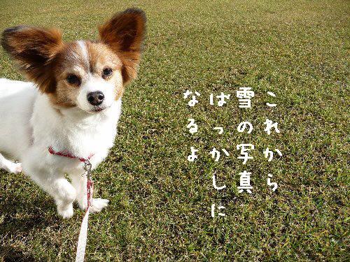 画像 004.pana9.jpg