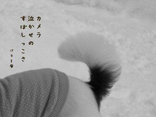 画像 026.mono10.jpg
