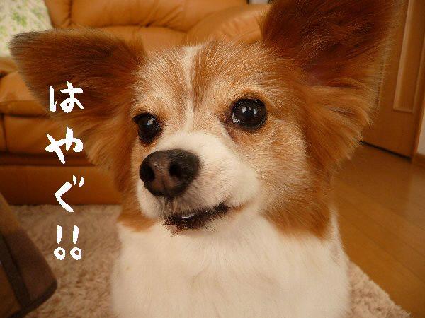 画像 038.pana17.jpg