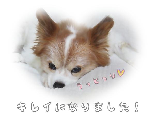 画像 041.ca6.jpg