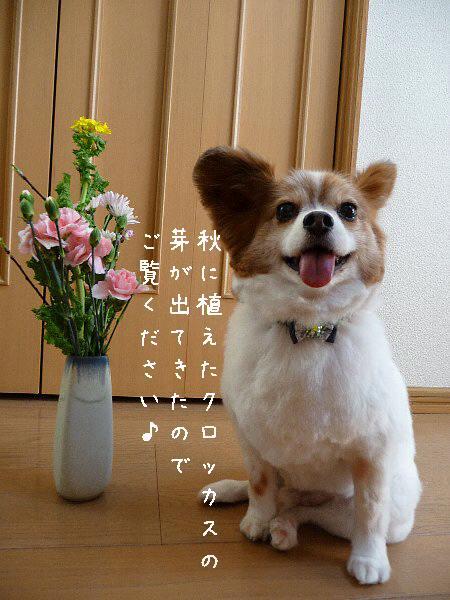 画像 041.pana18.jpg