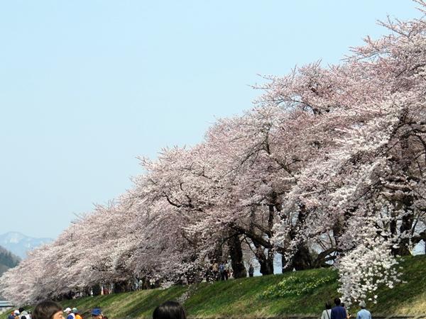 画像 049.sakutabi.jpg