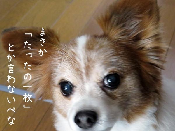 画像 051.ca4.jpg