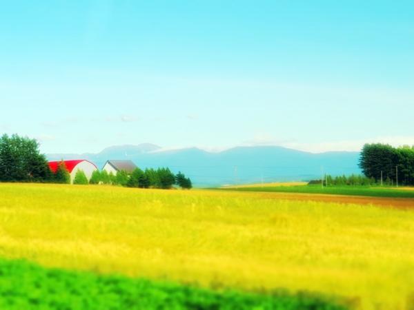 画像 061.biei.jpg
