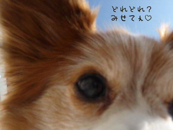画像 062.pana17.jpg