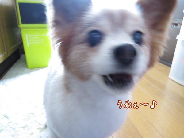 画像 064.ca8.jpg