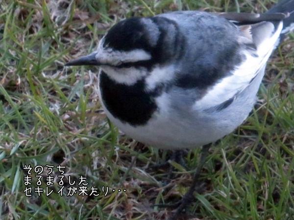 画像 066.ca5.jpg