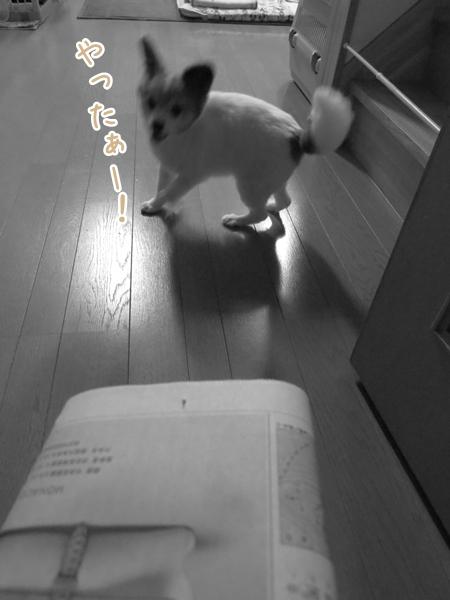 画像 072.ca11.jpg