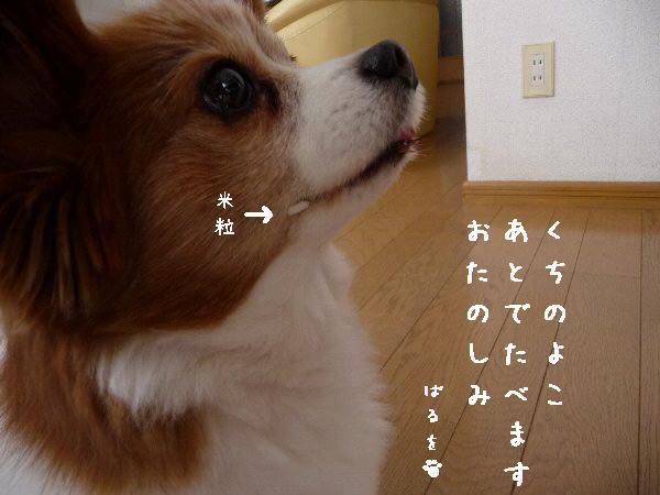 画像 076.pana11.jpg