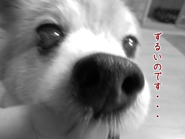 画像 077.ca11.jpg