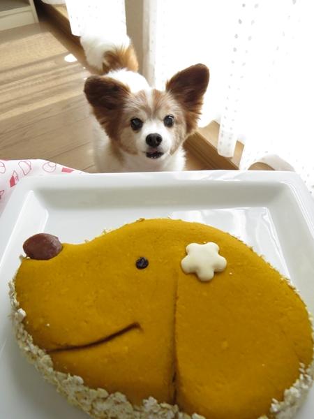 画像 088.cake.jpg