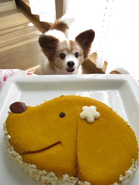 画像 089.cake.jpg