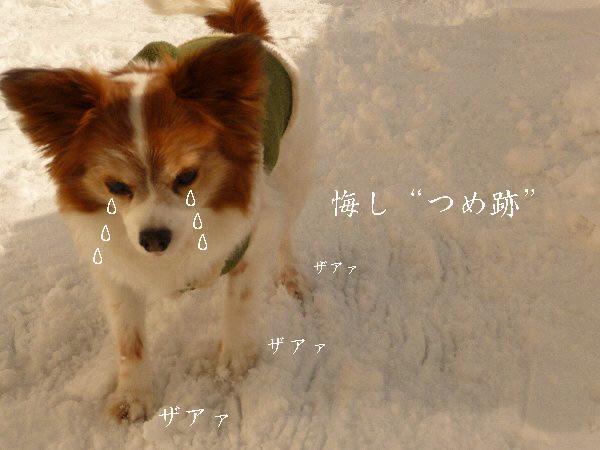 画像 090.pana17.jpg