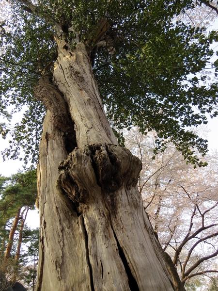 画像 095.sakutabi.jpg