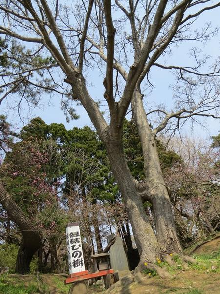 画像 121.sakutabi.jpg