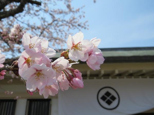 画像 143.sakutabi.jpg