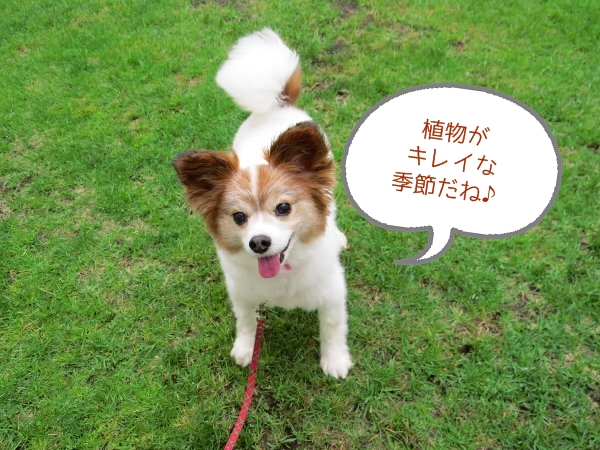 fujira1.jpg