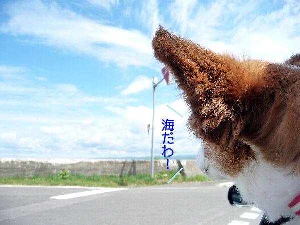 hamasu4.jpg