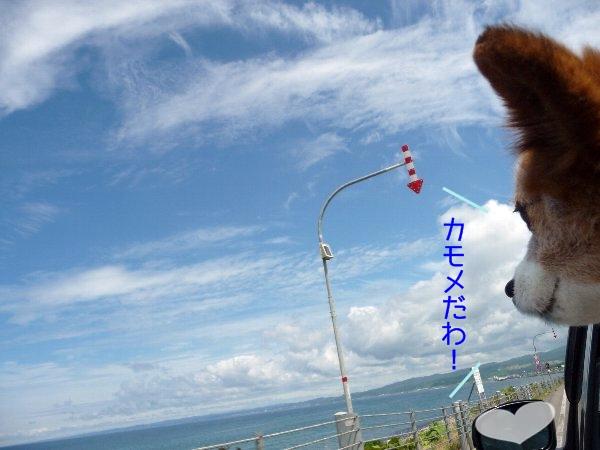 hamasu6.jpg