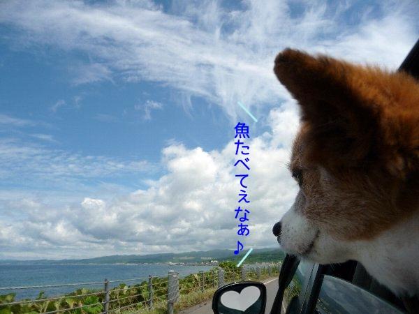 hamasu8.jpg