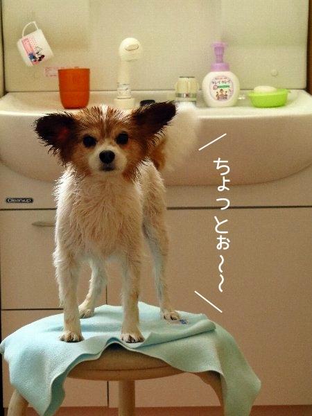 kawakase1.jpg