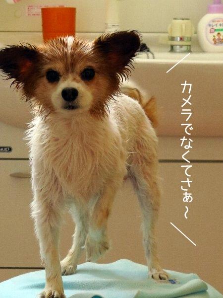kawakase2.jpg