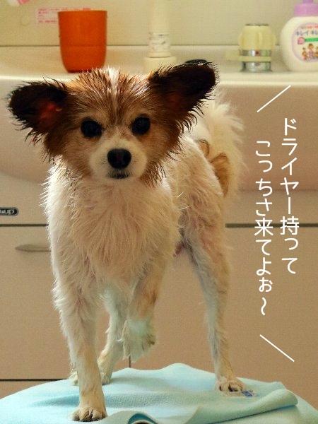 kawakase3.jpg