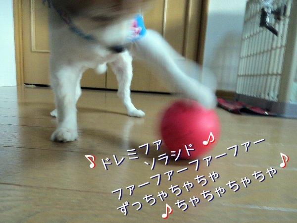 tamakoro3.jpg