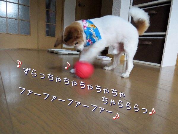 tamakoro4.jpg