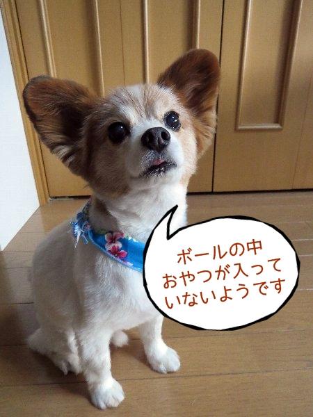 tamakoro6.jpg