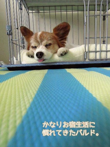 yugata6.jpg