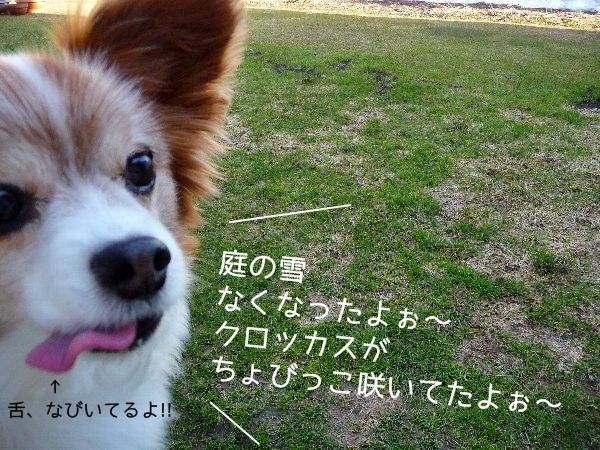 yukidoke1.jpg